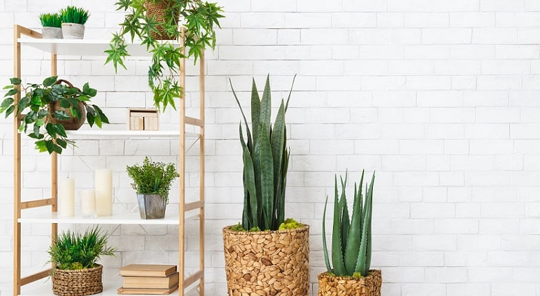 Green Home Makeover: Decorating With Plants