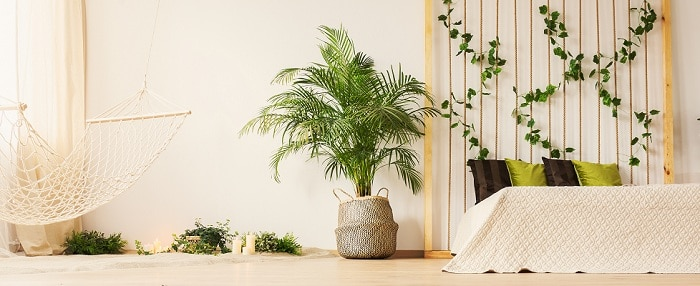 Why Homeowners Love Decorating With Plants